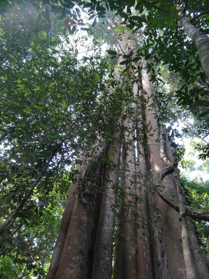 Planetary Boundary 1 – Biodiversity Loss